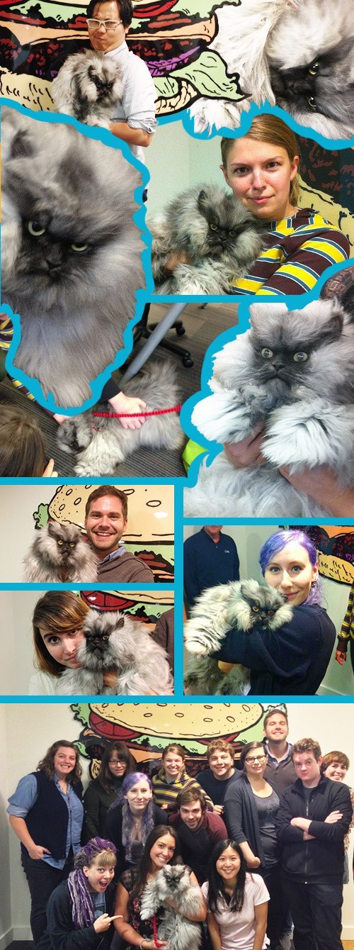 Cats,celebrity cats,cheezburger,colonel meow,interviews,offices
