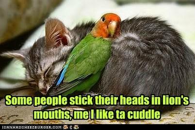 lions,cat,cuddle,dangerous,parrot