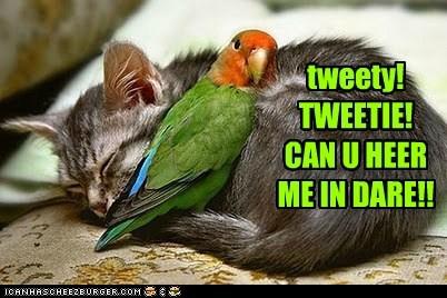 birds,captions,Cats,eat,friend,hear,nom,stomach