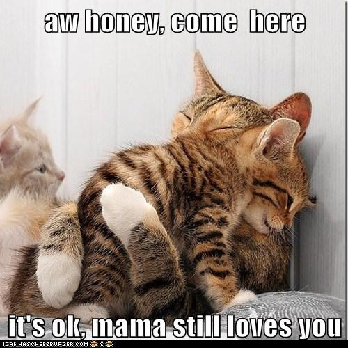 Lolcats: aw honey, come  here