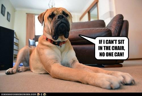 dogs,arm chair,mastiff,gaurd dog,no sharing