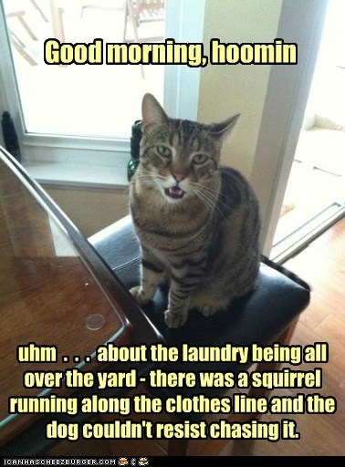 uhm  .  .  .  about the laundry being all over the yard - there was a squirrel running along the clothes line and the dog couldn't resist chasing it.