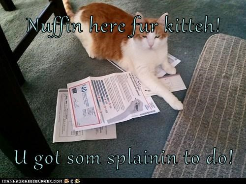 Nuffin here fur kitteh!  U got som splainin to do!