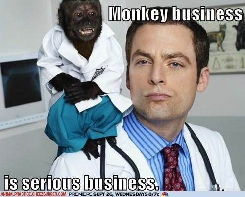 animal practice,business,captions,monkeys,serious business,sponsored sites,TV