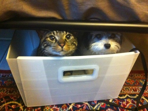 basket,cat,dogs,hide and seek,kitteh,kittehs r owr friends,what breed