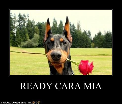 READY CARA MIA