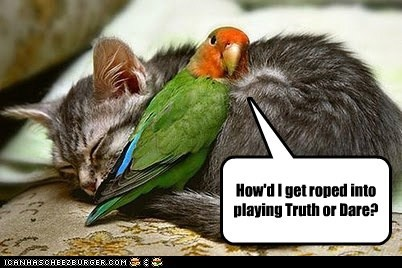 parrot,cat,sleeping,truth or dare,scary,dangerous