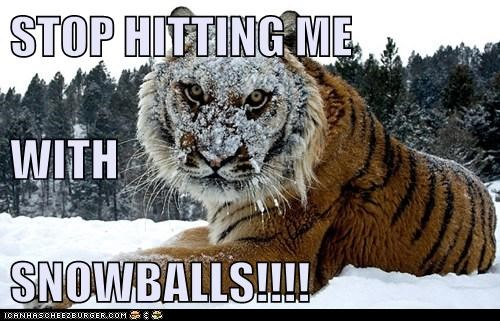 STOP HITTING ME WITH SNOWBALLS!!!!
