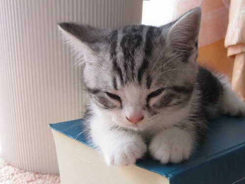 Cyoot Kitteh of teh Day: Curl Up With a Good Book