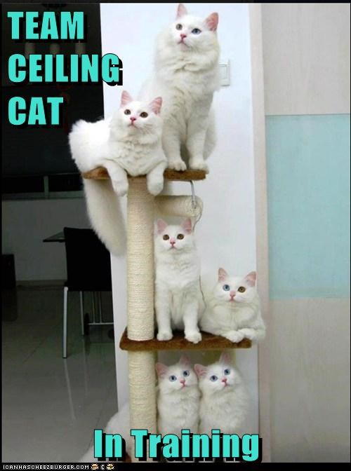 TEAM                      CEILING                         CAT  In Training