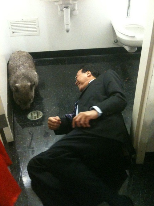 Wombat in the Men's Bathroom? No Problem!
