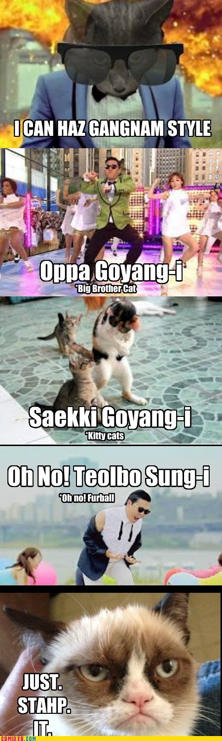 Gangnam Style: Now With 99.99% More Cats