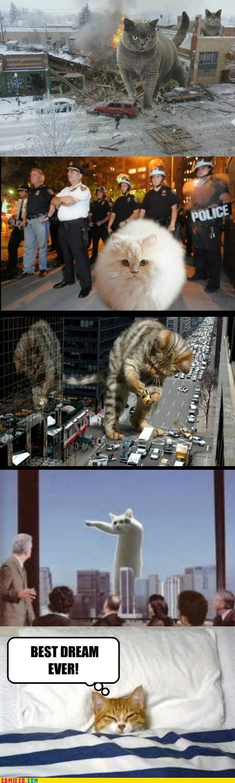 cat nip,dream,giant cat,godzilla