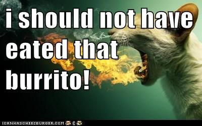 i should not have eated that burrito!