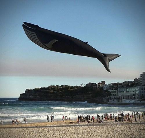 balloon,cute,design,flying,whale
