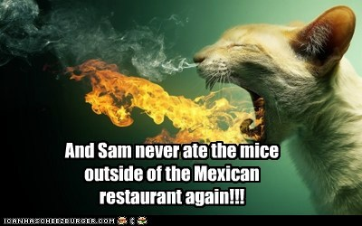 captions,Cats,fire,hot,mexican food,mexico,mice,spicy