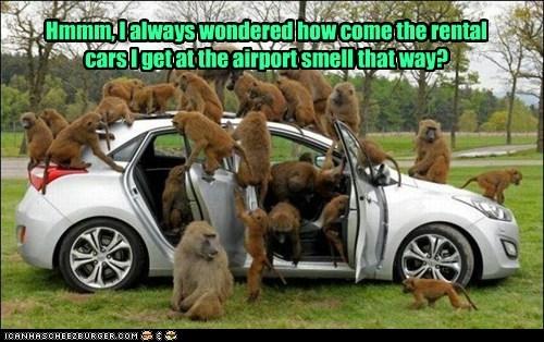 the smell hertz!!