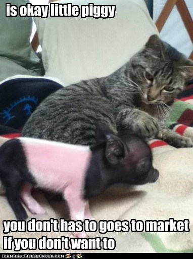 is okay little piggy