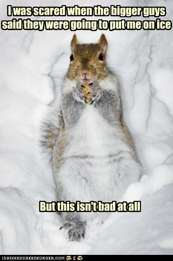 squirrel,ice,literal,scared,not bad,snow,comfortable