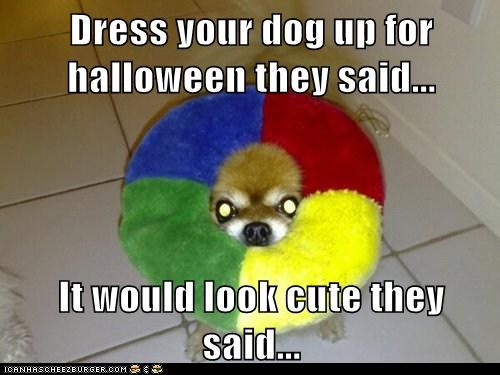 Dress your dog up for halloween they said...  It would look cute they said...