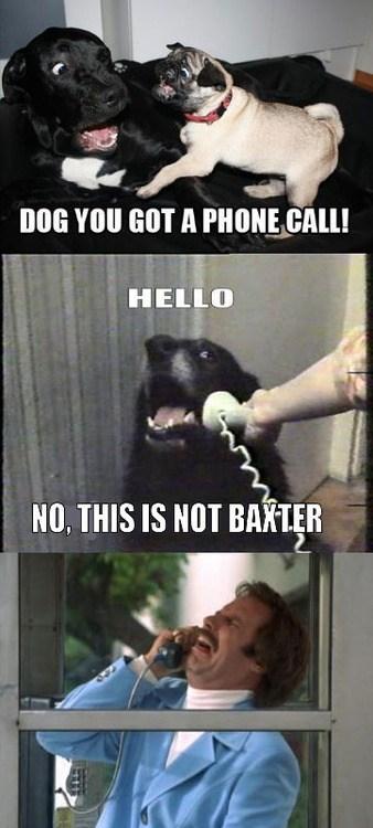 Baxter? BAXTER!!!