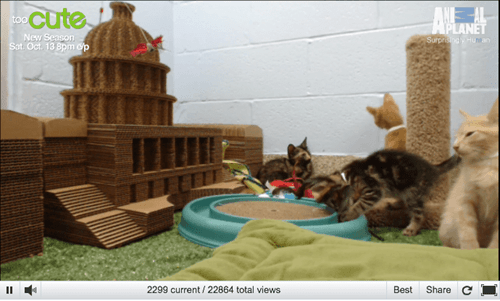 KITTEN CAM!  LIVESTREAM!  KITTENS!  STREAMING!  ZOMG!!!