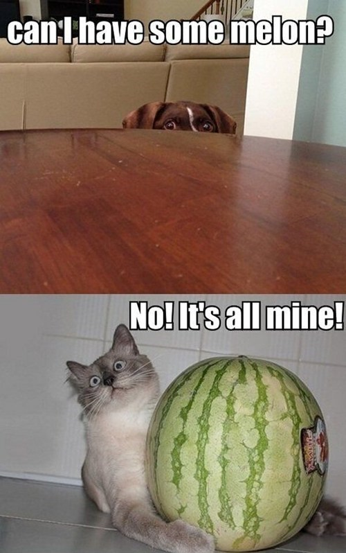 captions,Cats,dogs,food,fruit,mean,selfish,sharing,watermelon