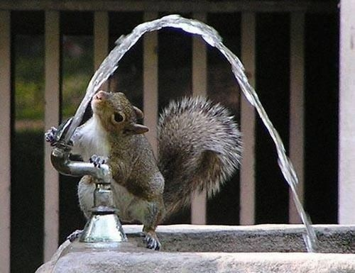clever,drinking fountain,squirrels,squee,delightful insurance