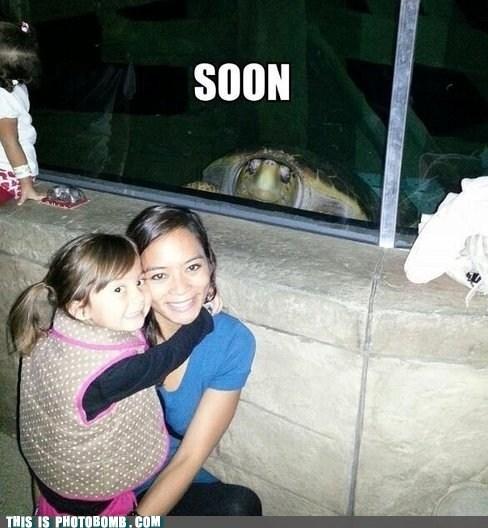 animals,family,SOON,turtle