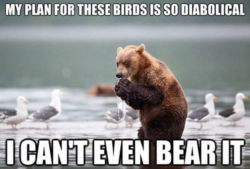bears,birds,captions,diabolical,mwahaha,plans,puns,seagulls