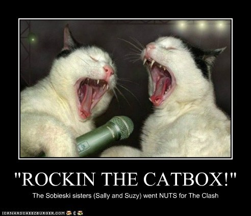 """ROCKIN THE CATBOX!"""