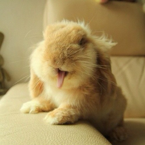 bunny,happy bunday,Monday morning,rabbit,sleepy,squee,yawn