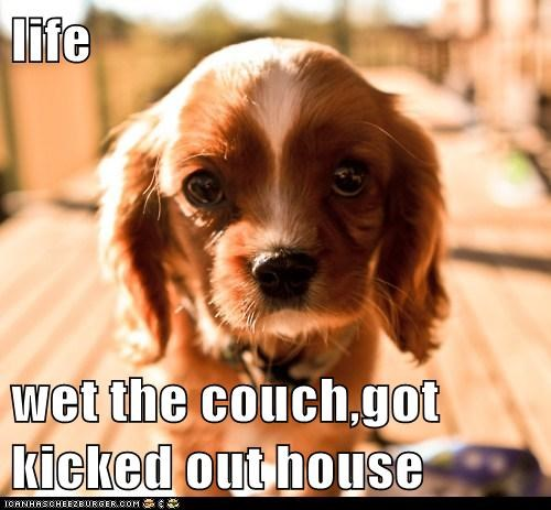 life  wet the couch,got kicked out house