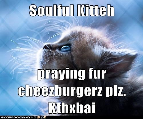 Soulful Kitteh  praying fur cheezburgerz plz. Kthxbai