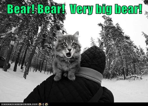 Bear! Bear!  Very big bear!