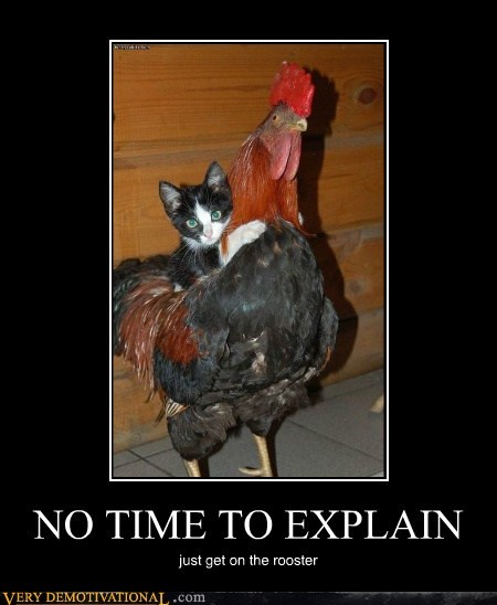 cat,chicken,rooster