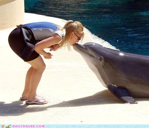 dolphins,Interspecies Love,water,kisses,mistletoe,squee