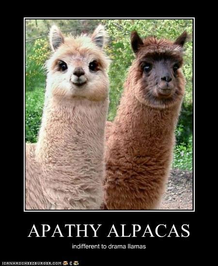 APATHY ALPACAS