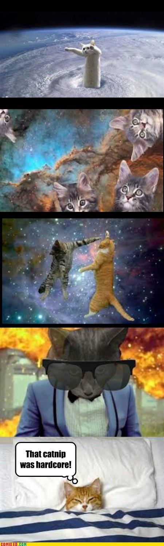 cat nip,Cats,dreams,shopped