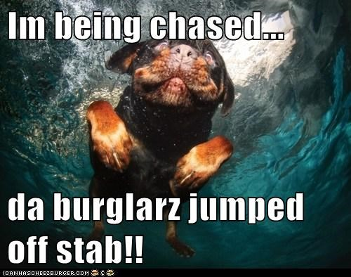 Im being chased...  da burglarz jumped off stab!!