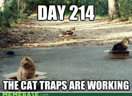 boxes,Cats,day,traps