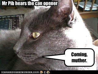 Mr Pib hears the can opener