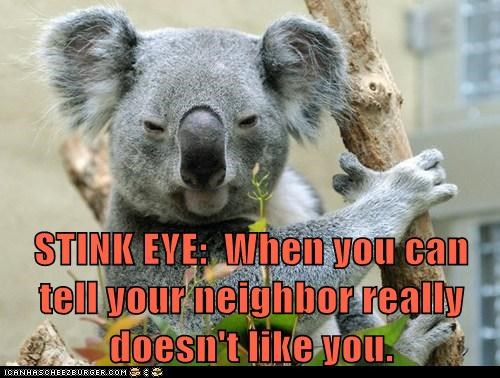 STINK EYE:  When you can tell your neighbor really doesn't like you.