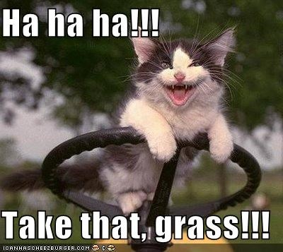 Ha ha ha!!!  Take that, grass!!!