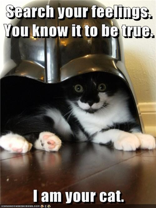 Search your feelings. You know it to be true.  I am your cat.