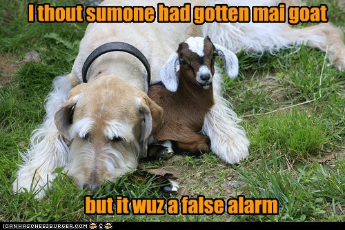 dogs,goat,pun,Interspecies Love,what breed