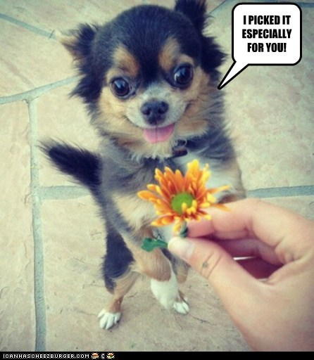 I PICKED IT ESPECIALLY FOR YOU!