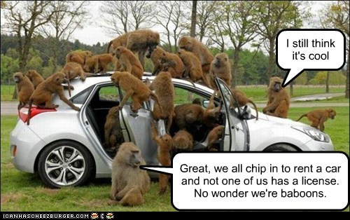 cool,baboons,car,rent,drivers license