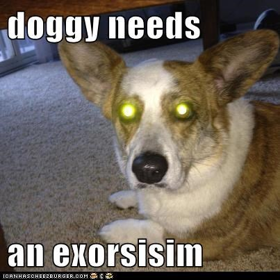 doggy needs  an exorsisim
