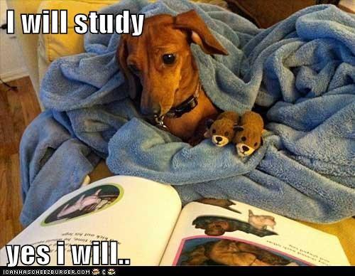 I will study  yes i will..